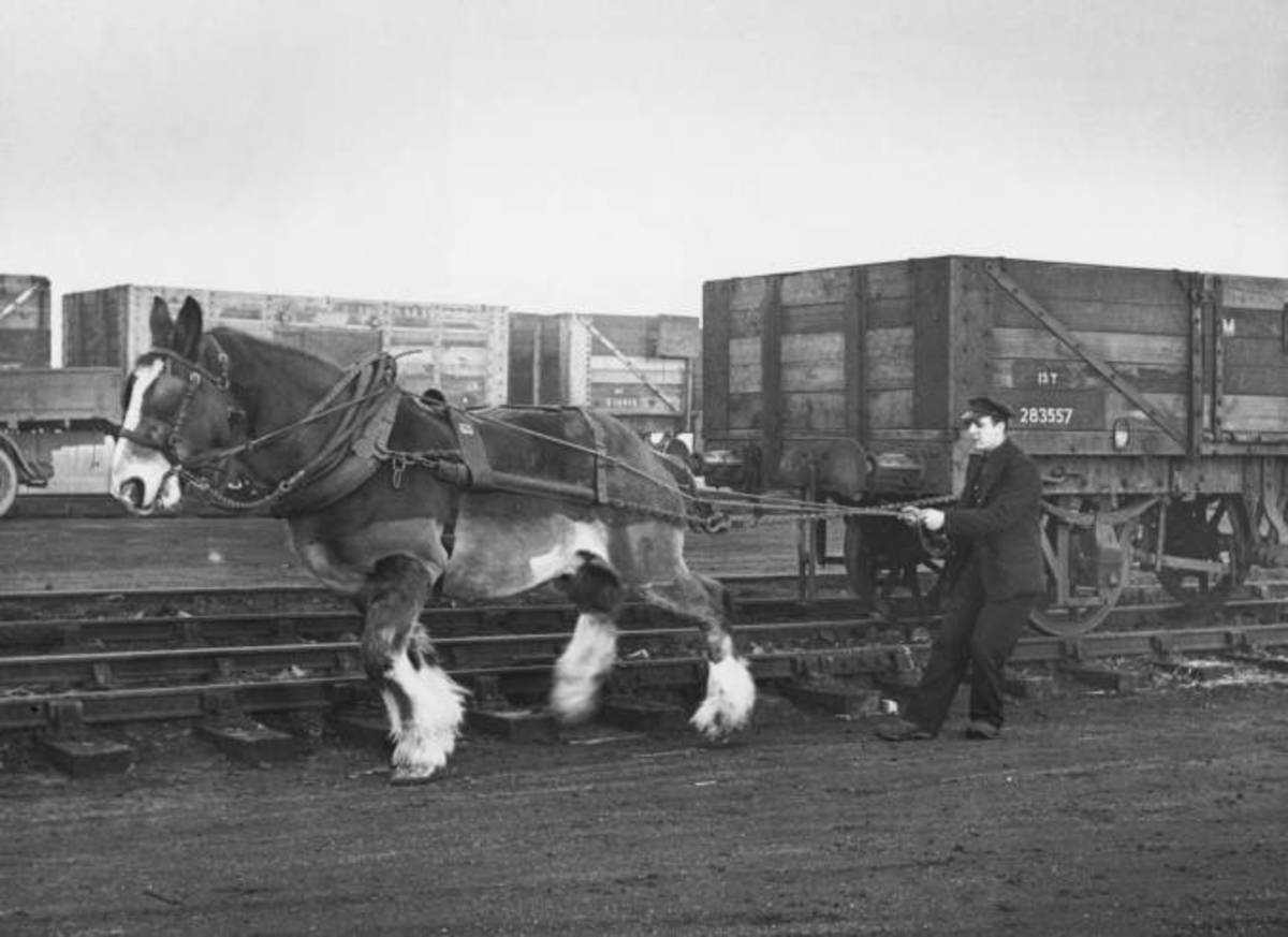 Horse shunting at Witham, Essex. Much of the land in Essex, Suffolk and Norfolk was fairly level - which probably gave someone the notion of using horses for shunting purposes long after the advent of steam