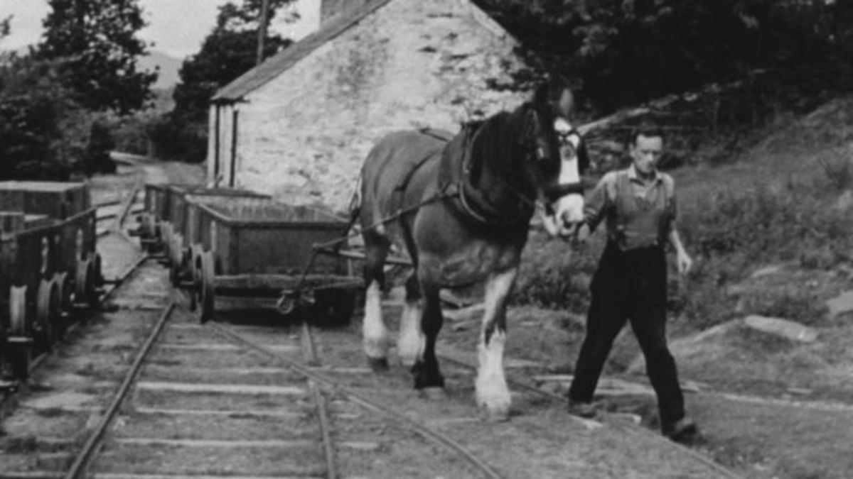 Horse-drawn wagons on the Talsam Railway, 1962 - the railway was situated near Lampeter in Pembrokeshire, SW Wales