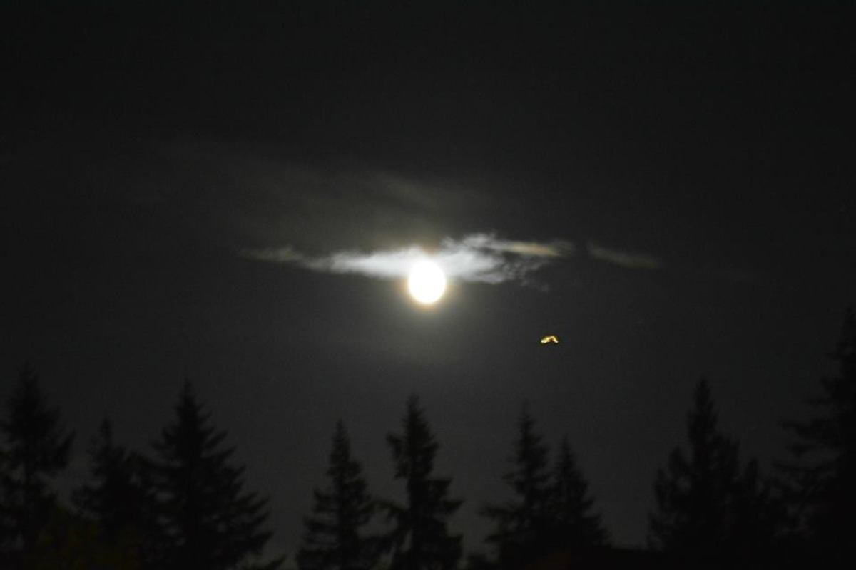 This is a great shot of a TR-3B and the Moon near Elena's house in British Columbia