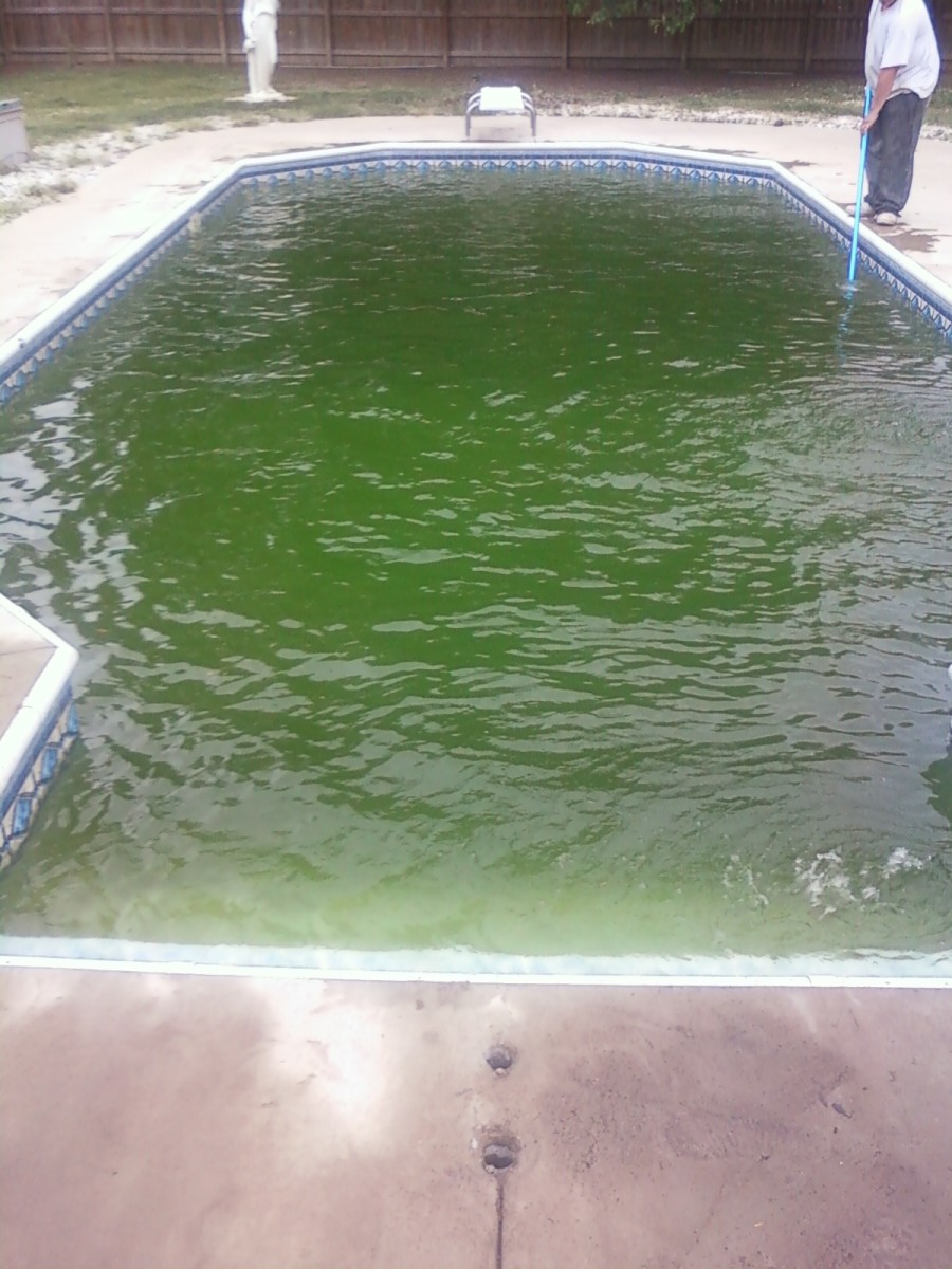 How to get rid of algae in pool without chemicals naturally hubpages for Kill black algae swimming pool