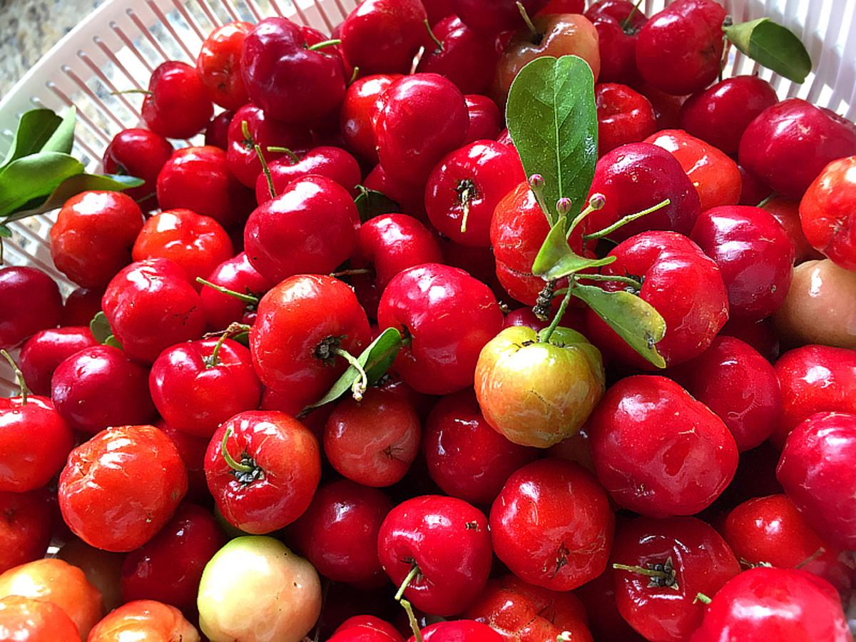 Dark red cherries are sweeter.