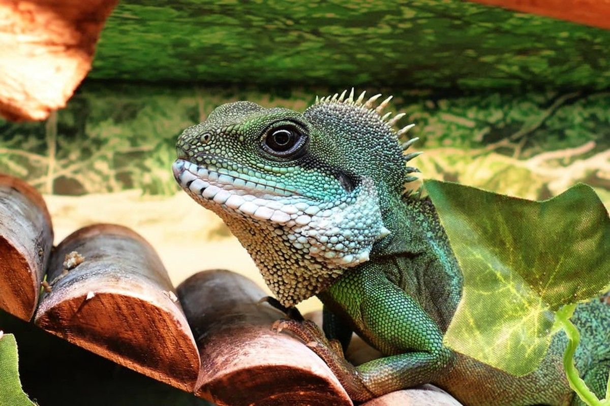 Don't forget about exotic pets like iguanas, bearded dragons, and other scaly (or feathery!) friends.