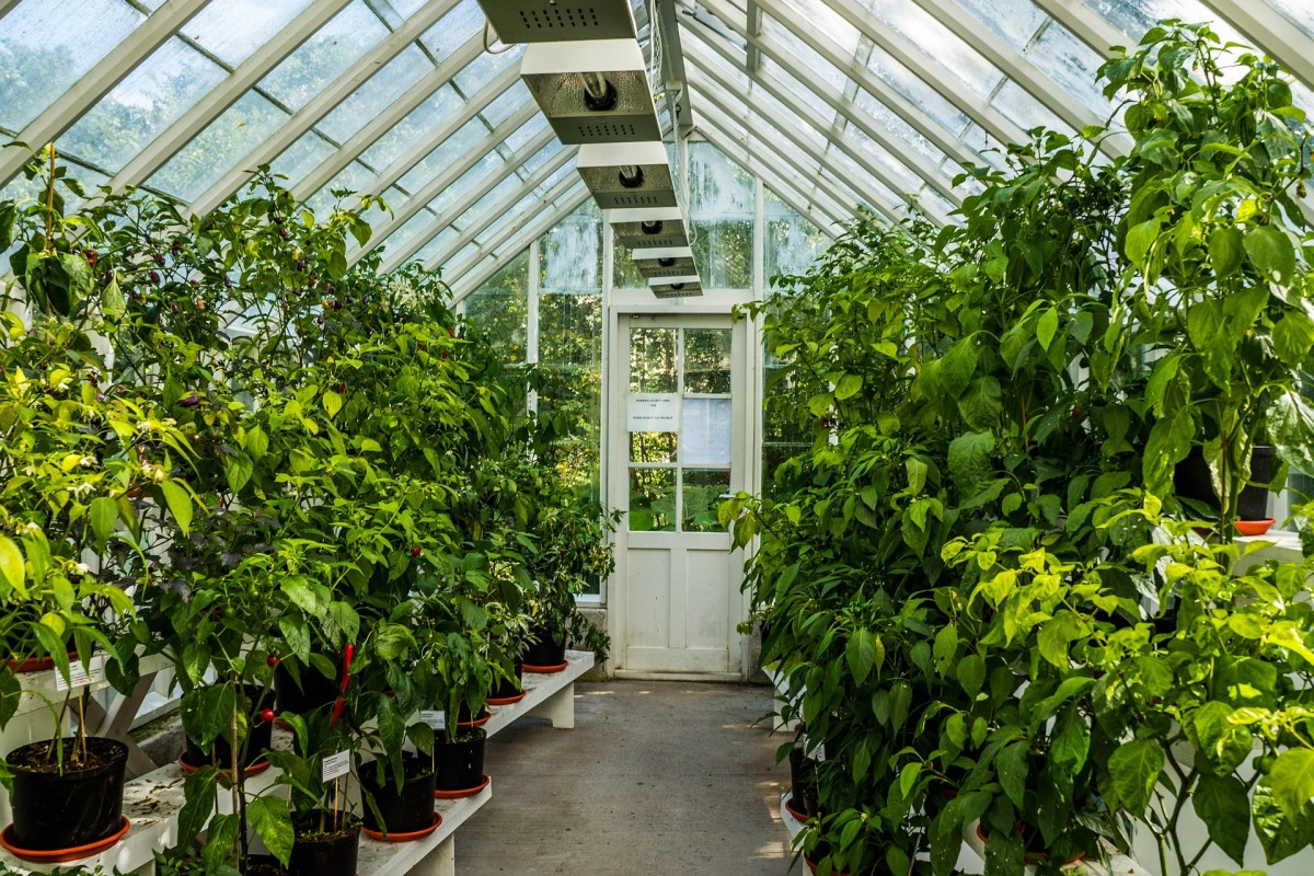 A large greenhouse to accommodate many plants.