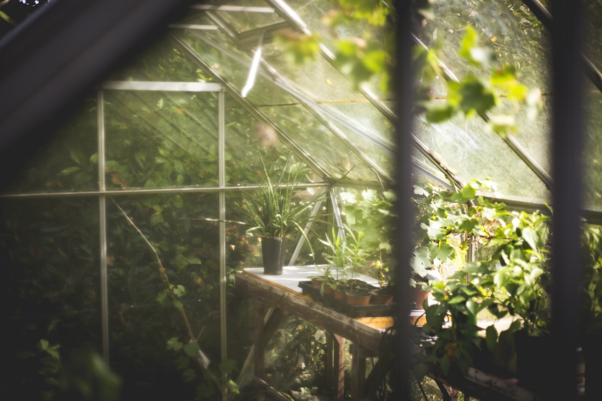 An inside view of plants in a greenhouse.