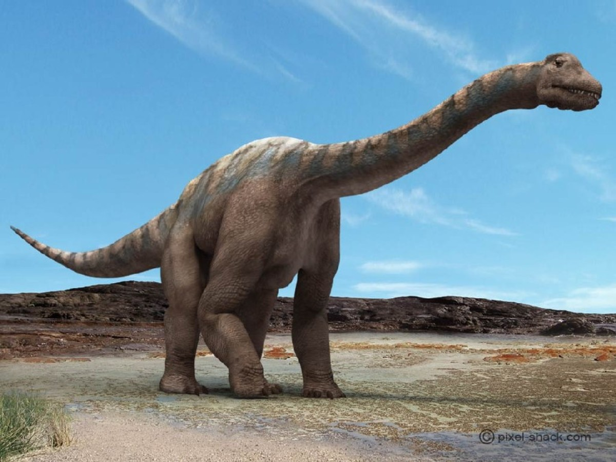 Image of a Argentinosaurus