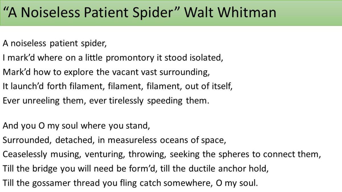 spider poem whitman
