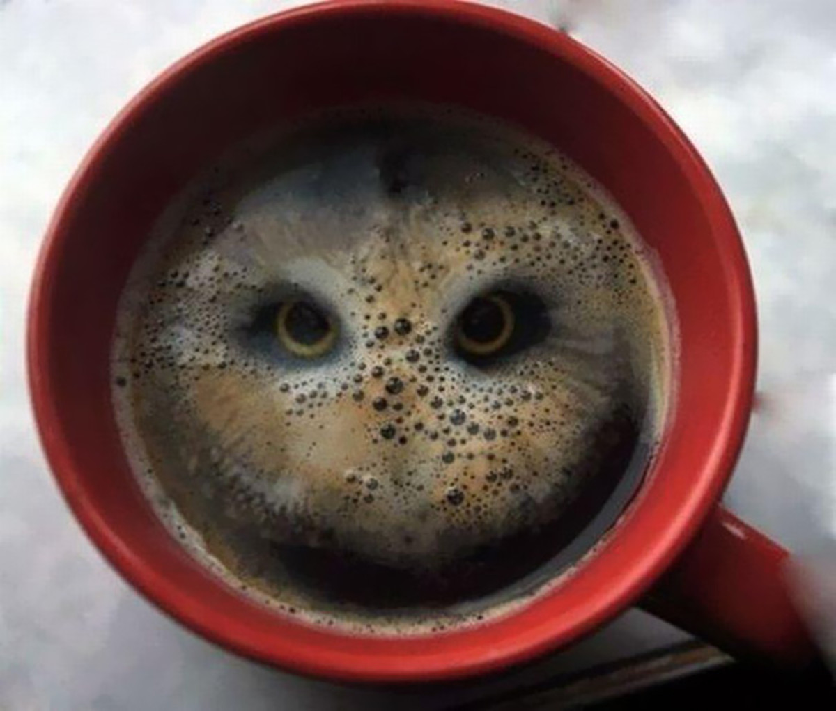 Coffee Owl Optical Illusion
