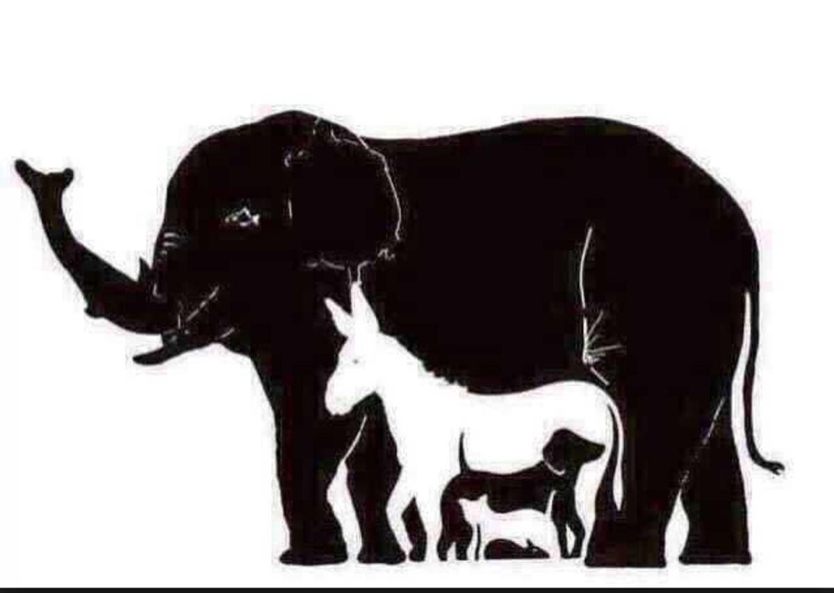 How Many Animals