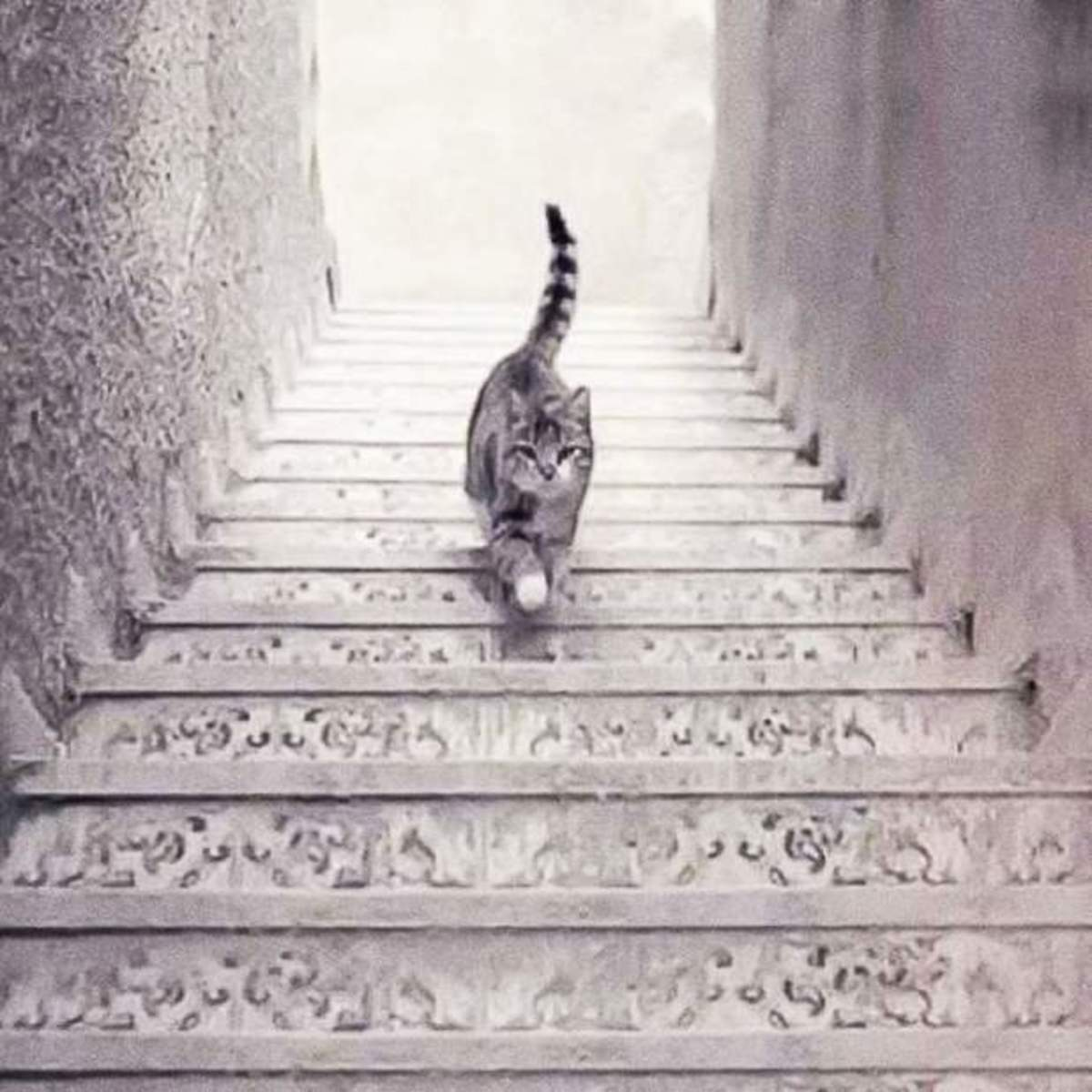 Cat Going Up or Down Stairs illusion