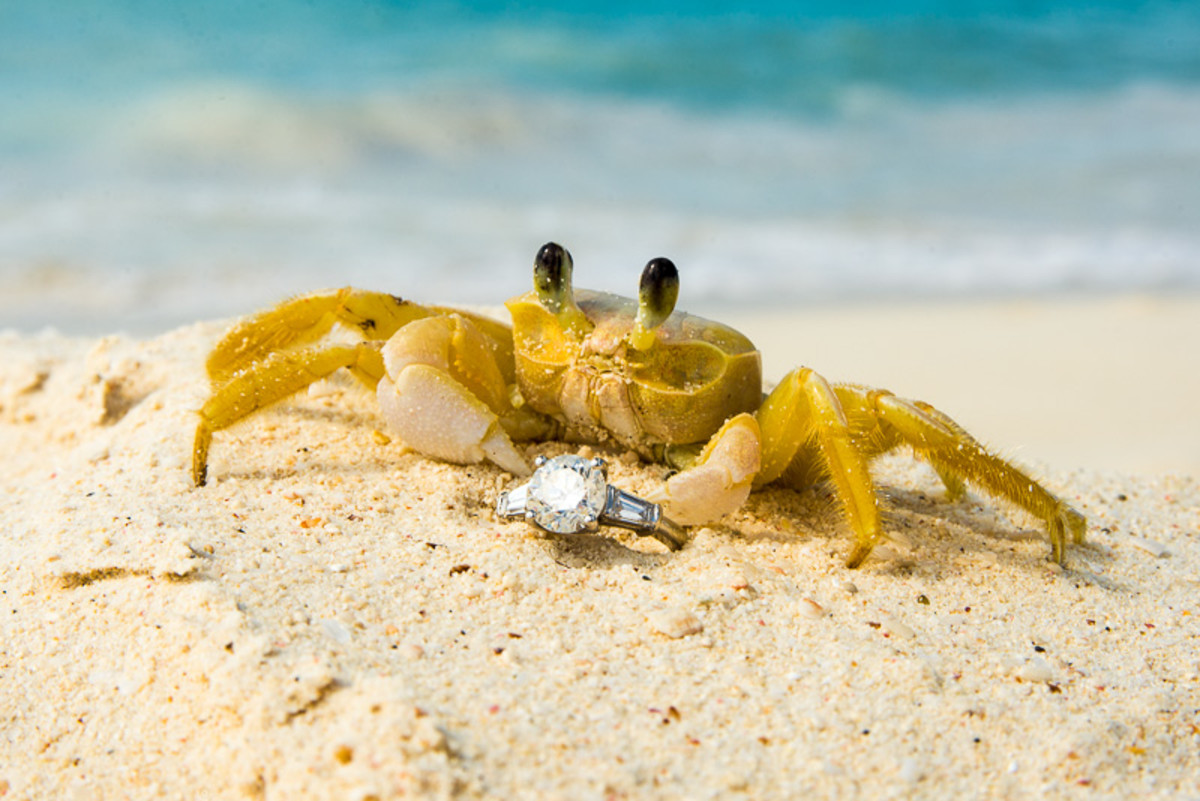 Even on the pristine beaches....watch out for thieving crabs!