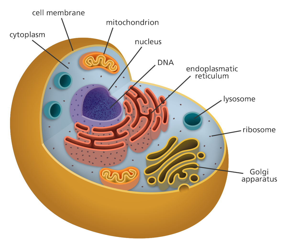 The Cell: Theory & Structure