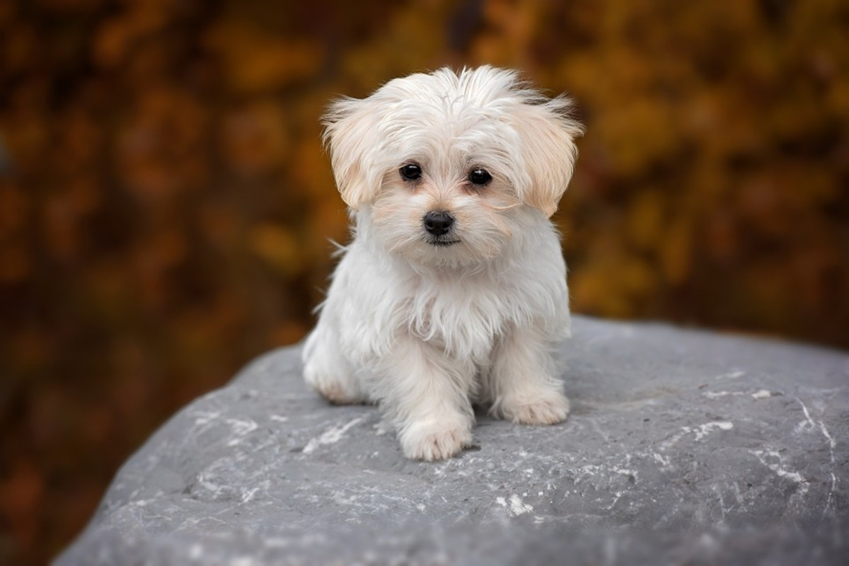 Dogs - Low maintenance pets that like to cuddle