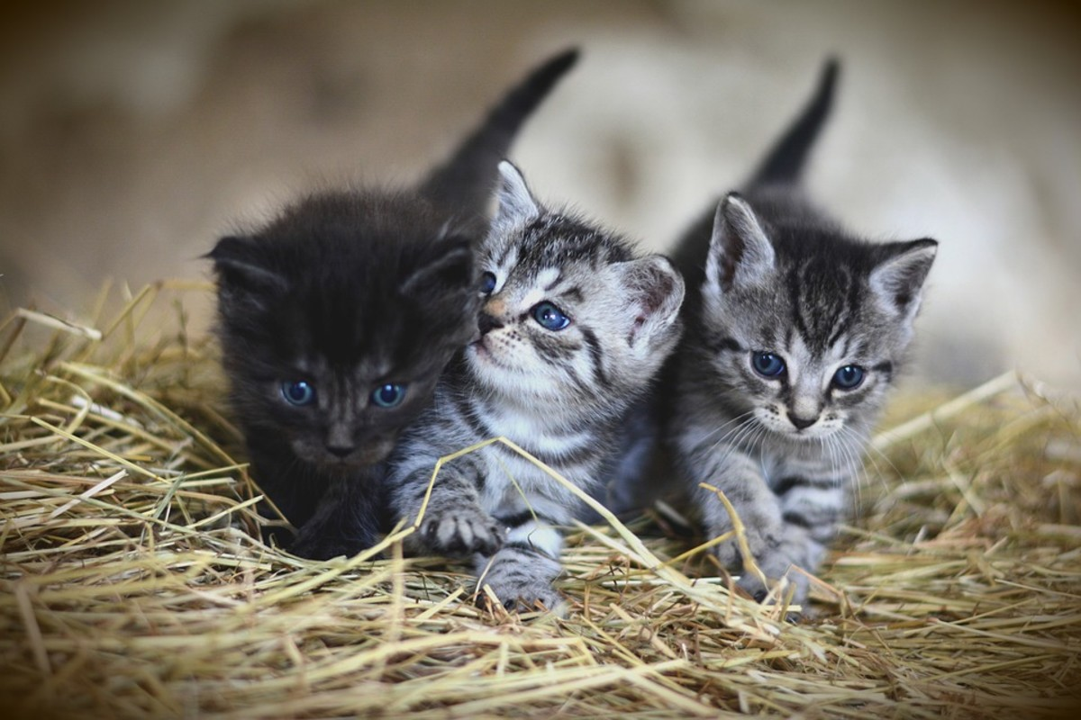 Cats - Small pets that are easy to take care of