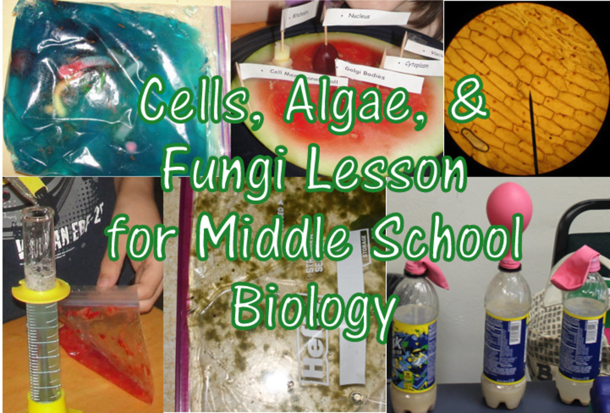 Cells, Algae, and Fungi Lesson for Middle School Biology