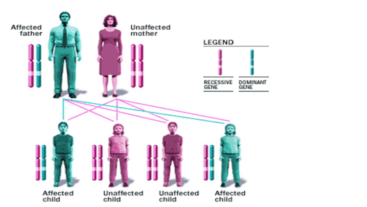 Pic: How thalassemia gene is inherited