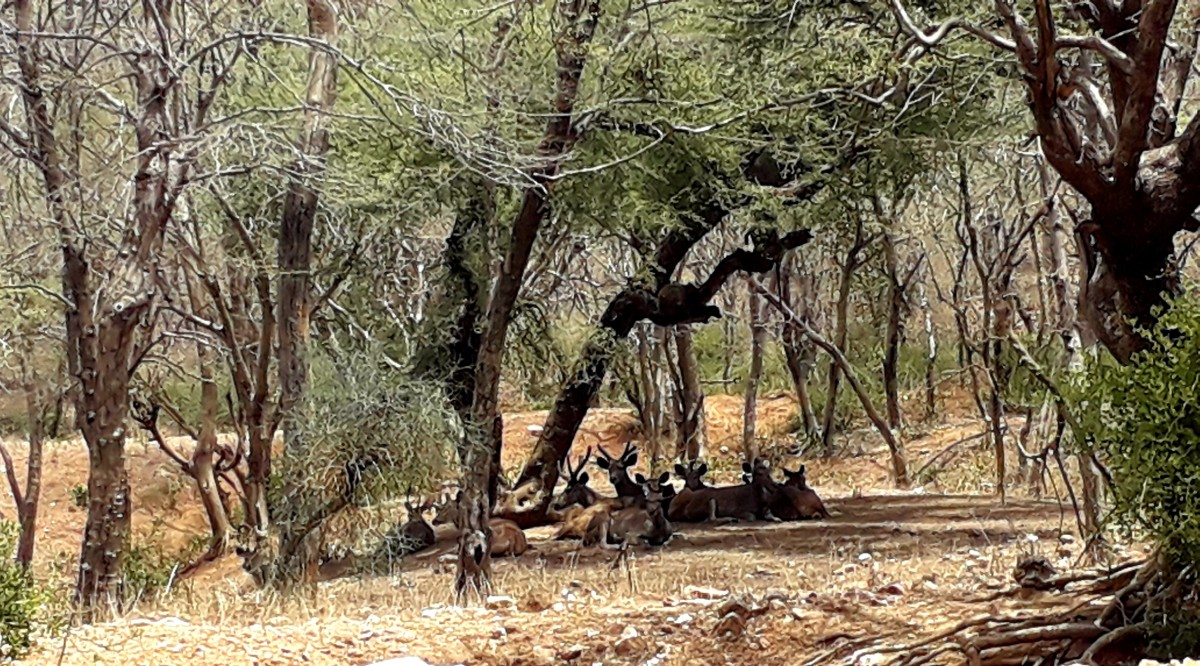 Group of Deer relaxing at the Sariska National Park