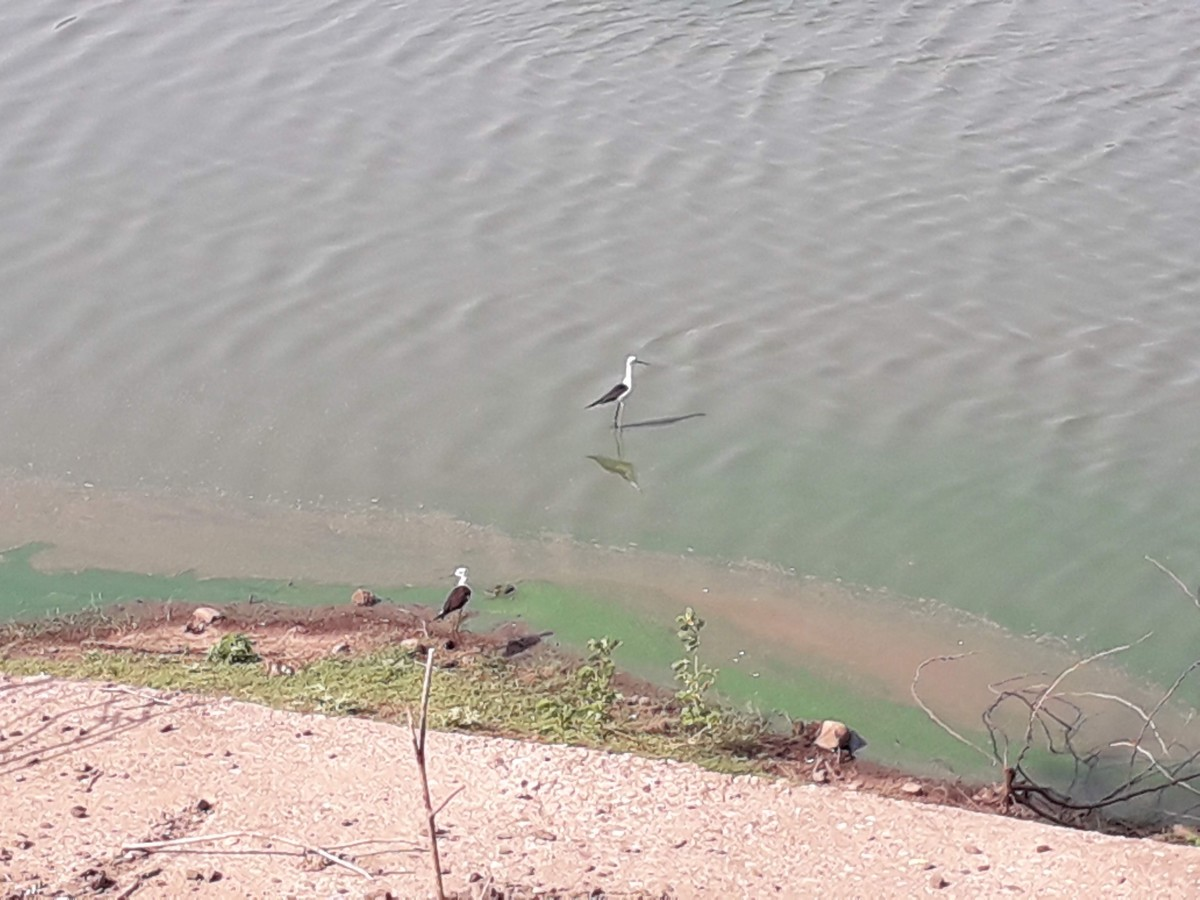 Aquatic Birds at the Sariska National Park