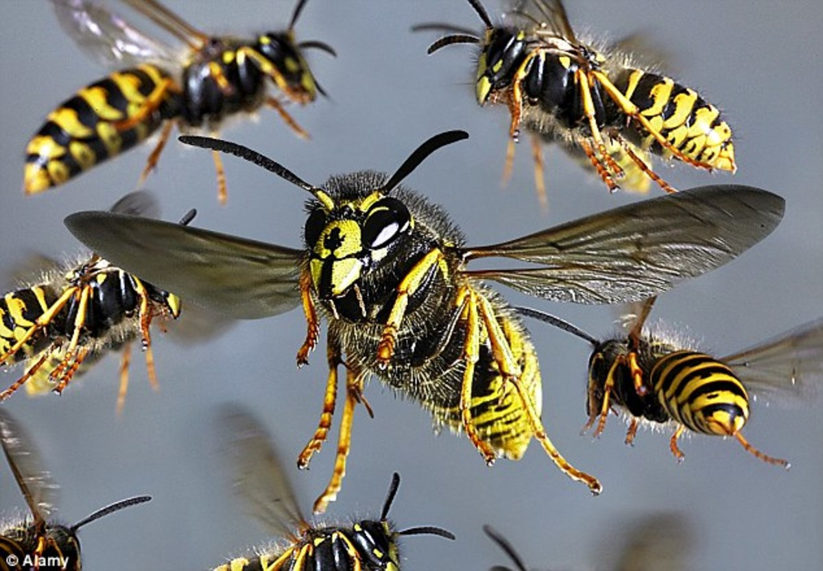 Imagine a swarm of this attacking you.