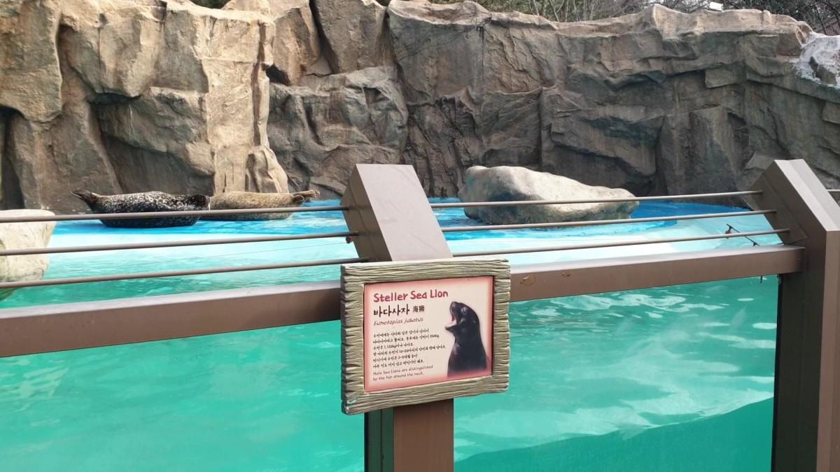 Sea lions - Zootopia