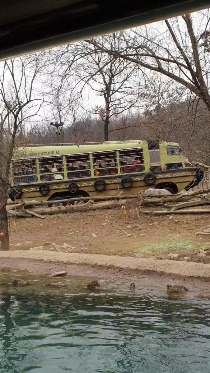 Lost Valley Safari Ride - Zootopia