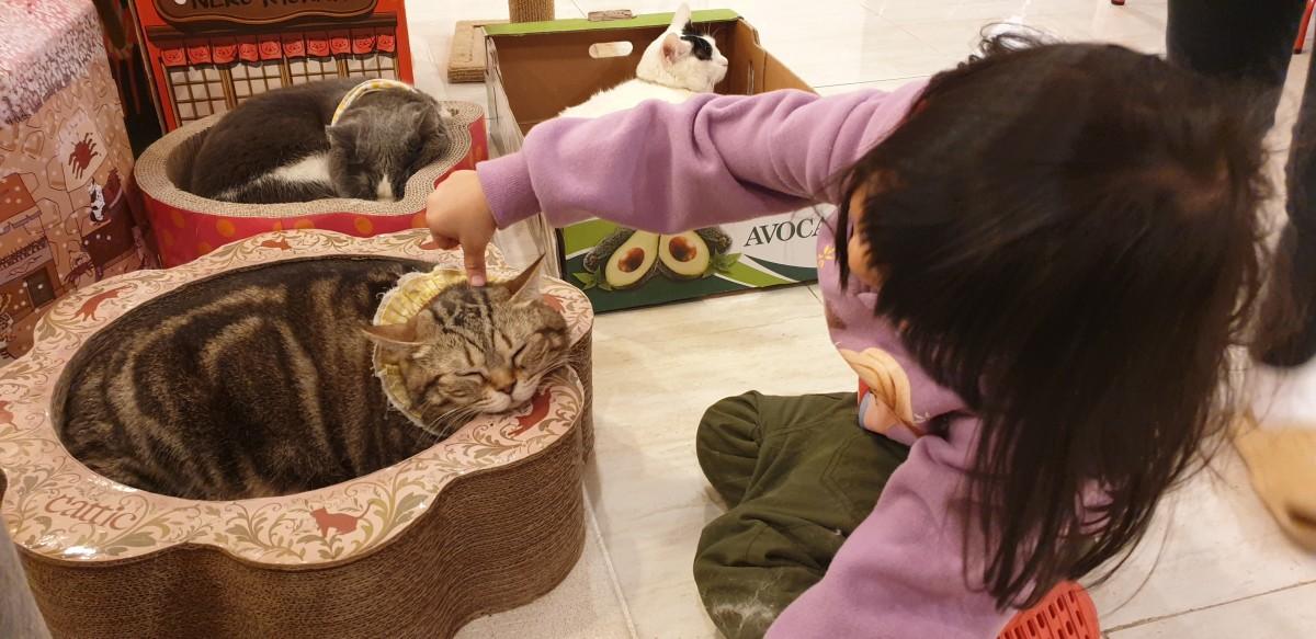 Cat Cafe, Myeongdong