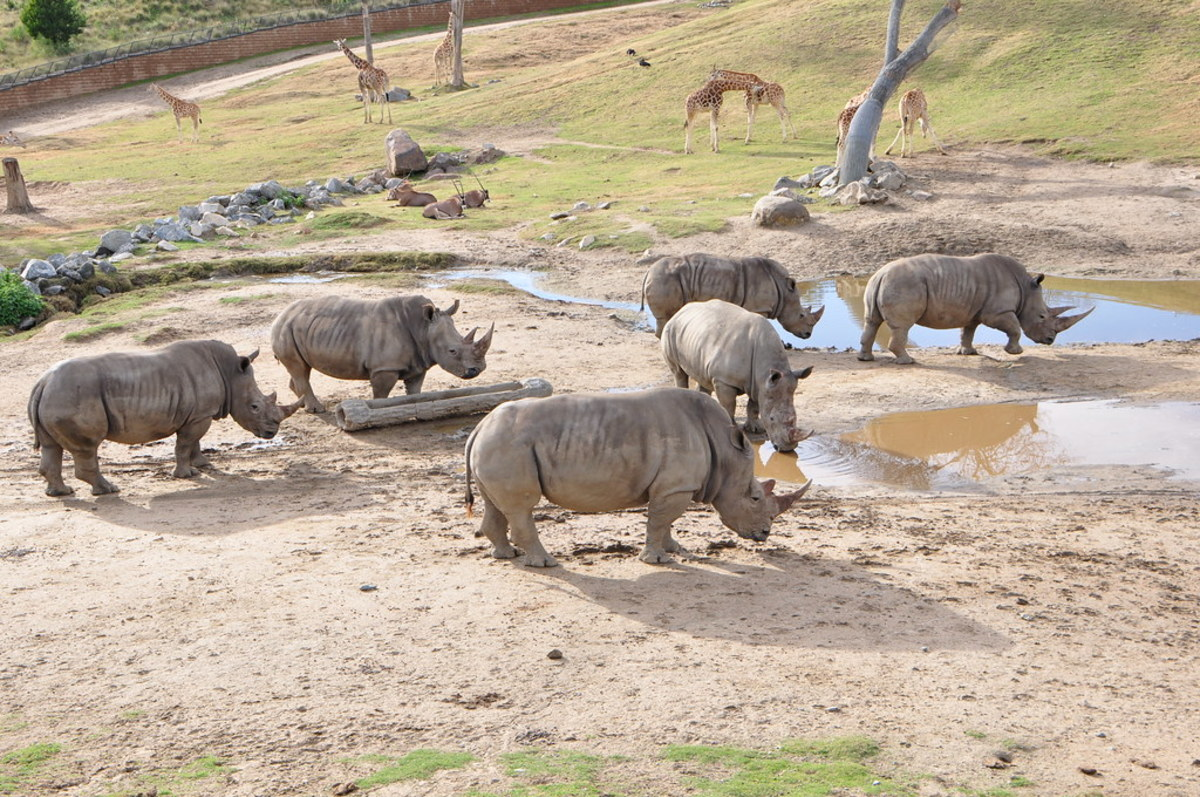...while in fact, they spend most of their time in large habitats like these, and the small enclosures are just night quarters for care and safety, just like a dog crate, a horse stall, or a child's bedroom.