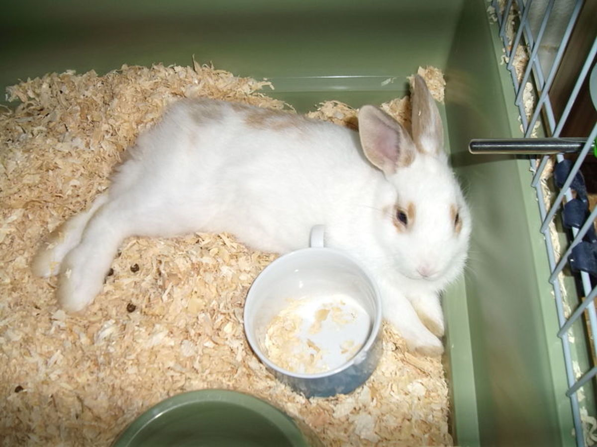 If you own pets like this rabbit, you have no ground whatsoever on which to criticize modern zoos.