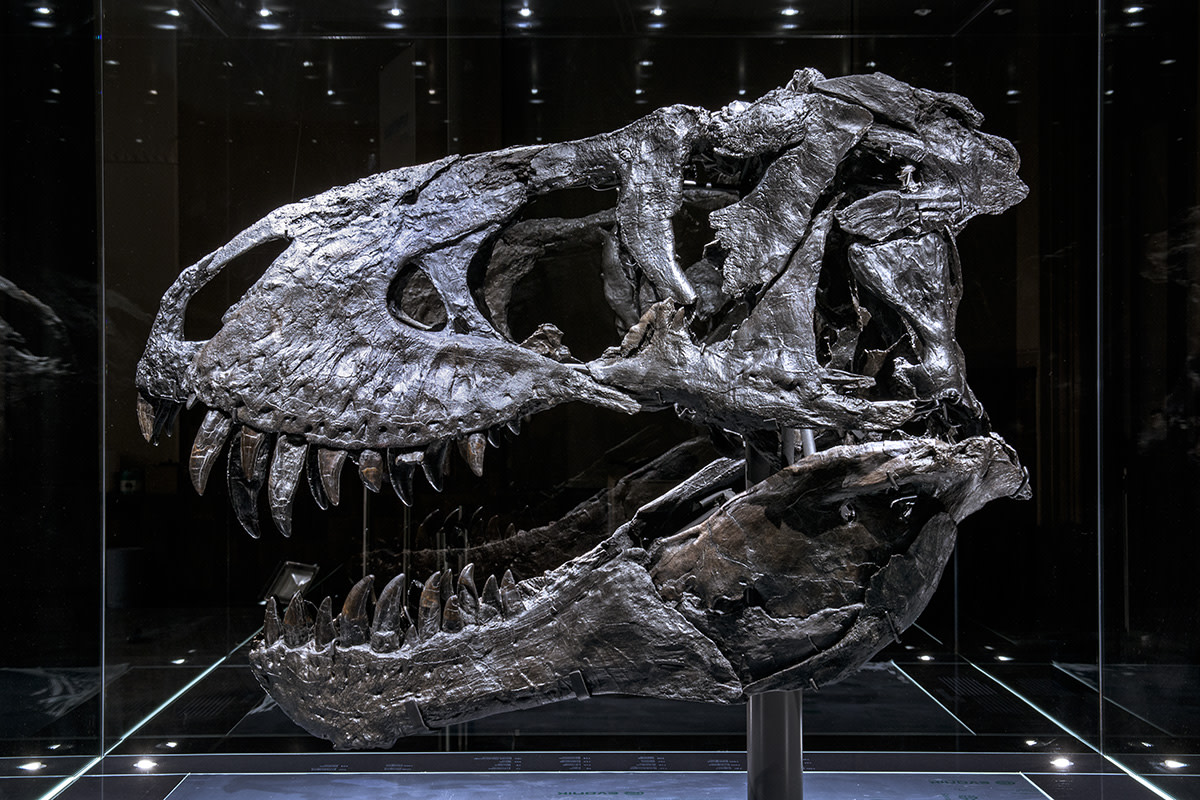 Why Dinosaurs Have Holes in Their Skull