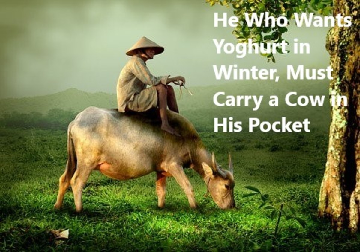 A cow in your back pocket may look something like this.