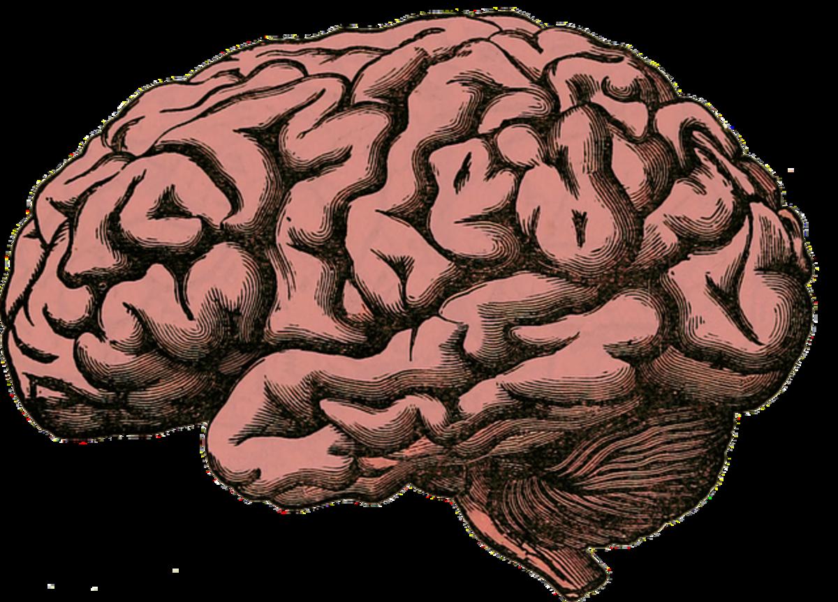 Importance of Dopamine And Methods to Improve Dopamine Naturally