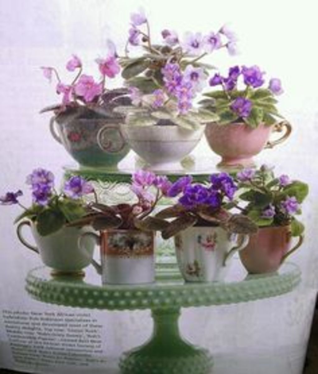 Here is one way to display your African violets. So simple , yet elegant
