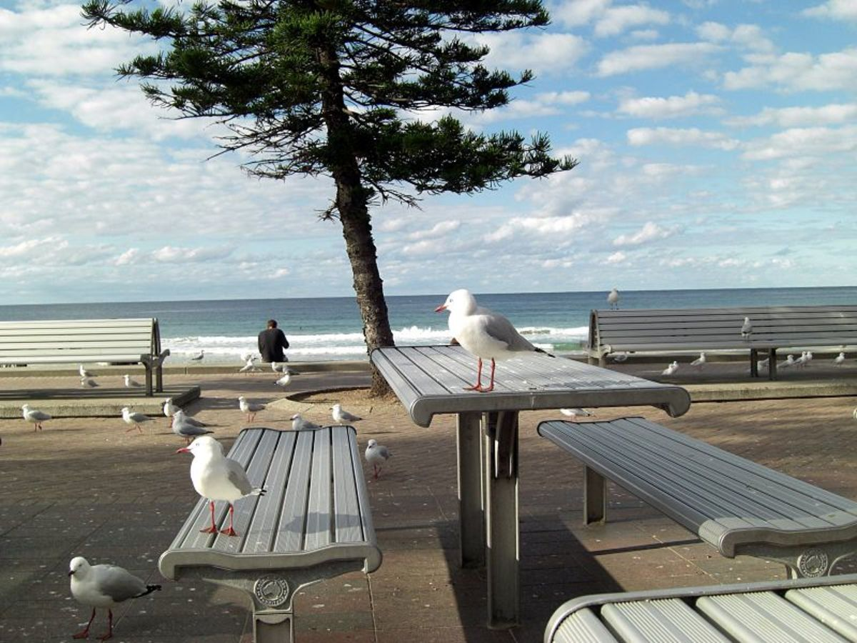The Covid 19 crisis has grown so acute that even the birds are social distancing.
