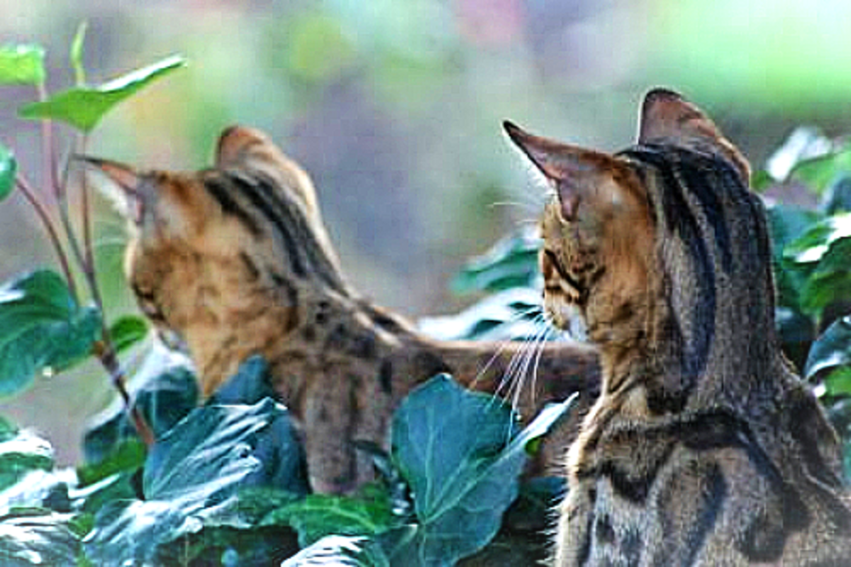 Did you see anything Fred? Naw, she keeps chasing her tail Joe, Ugh felines be trippin'!