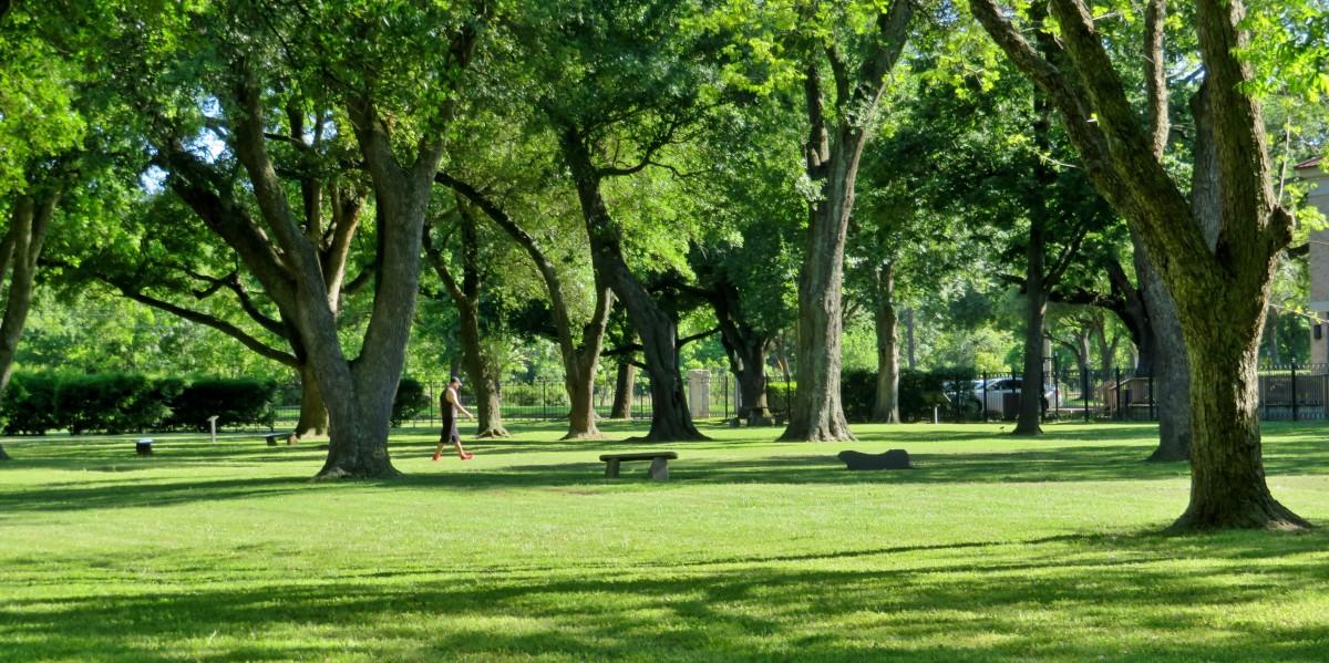 Carolyn H Wolff Park: An Urban Arboretum in Houston