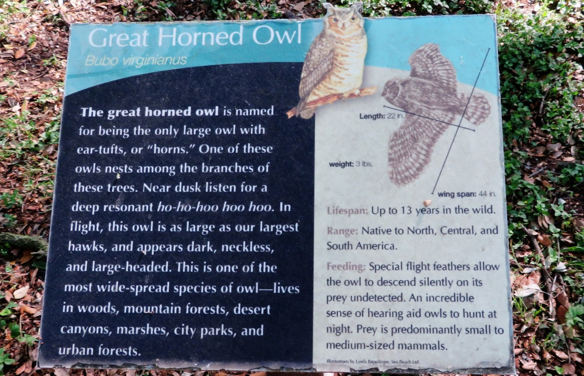 Great Horned Owl Sign