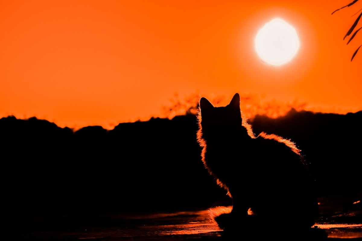 Wilbur would tom cat around at midnight: Image by Dimitris Vetsikas from Pixabay