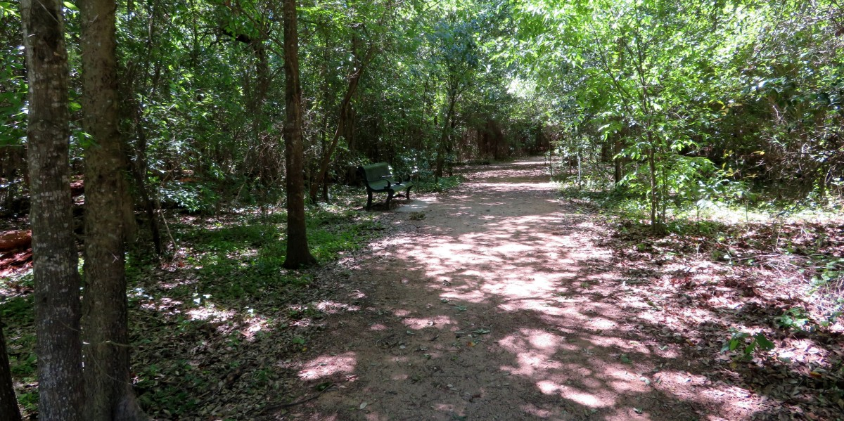 Part of the wooded area in West 11th Street Park