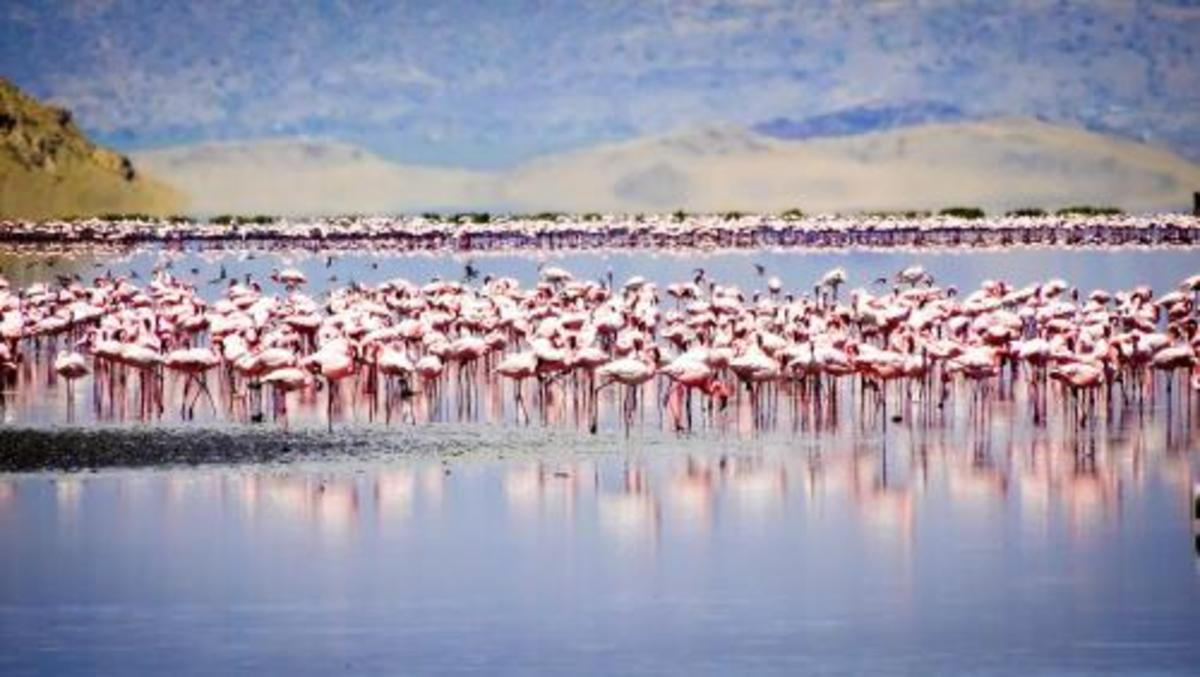 lake-natron-one-of-the-unique-lakes-in-the-world