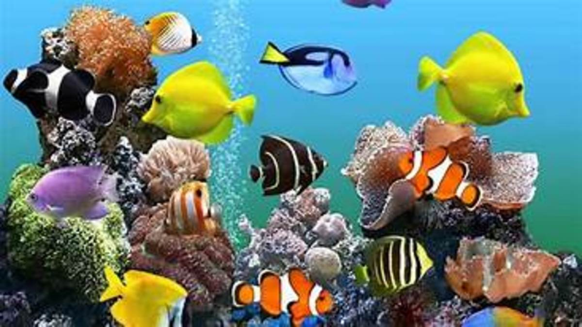 12-of-the-largest-aquariums-in-the-world