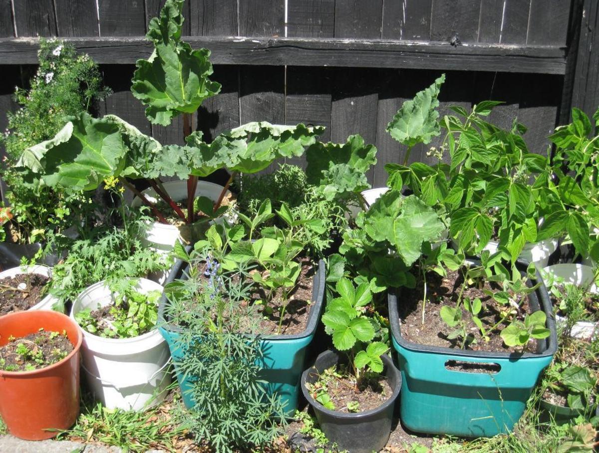 10 Tips For a Successful Witch's Garden