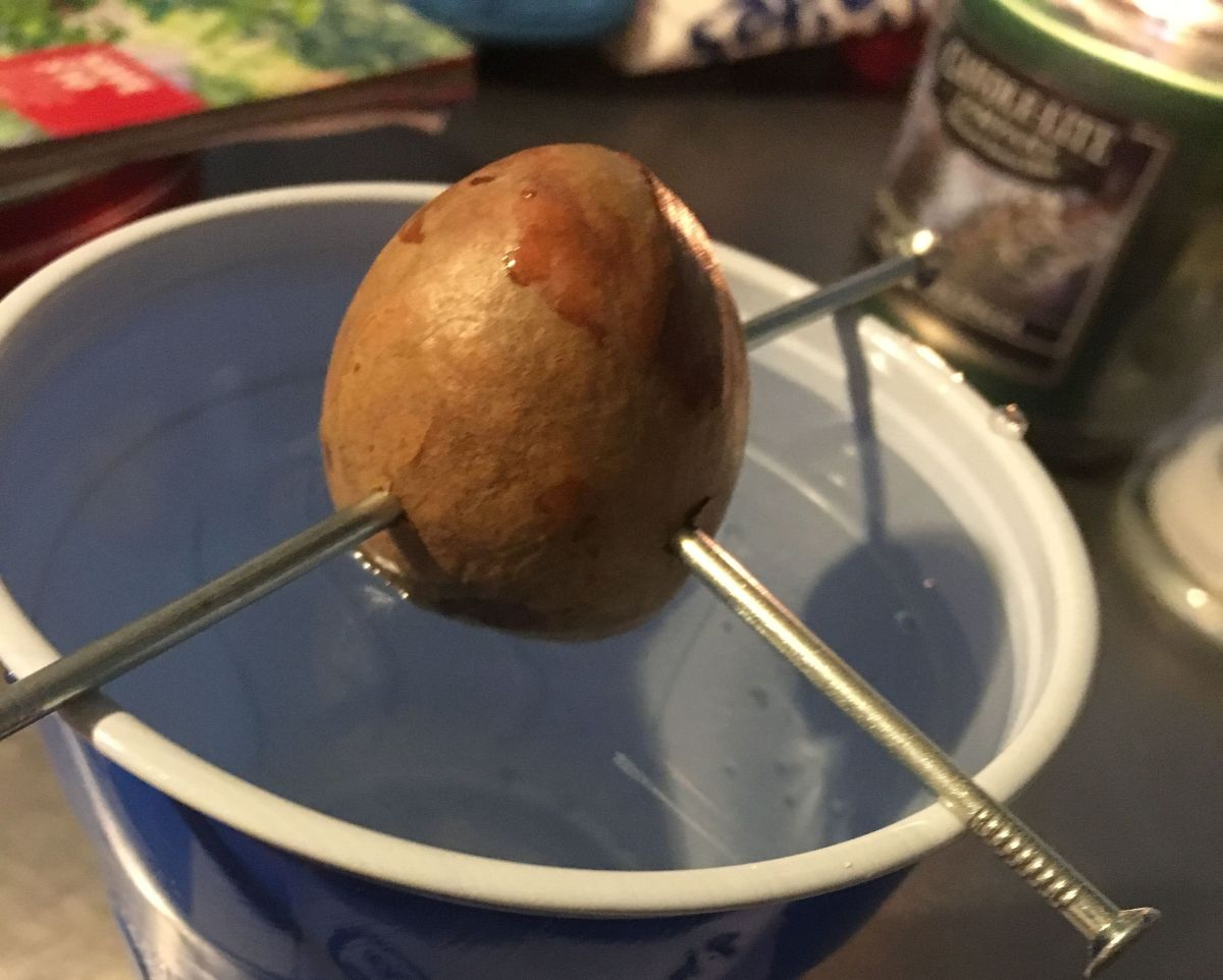 how-to-grow-an-avocado-tree-from-an-avocado-you-get-at-the-grocery-store-two-methods