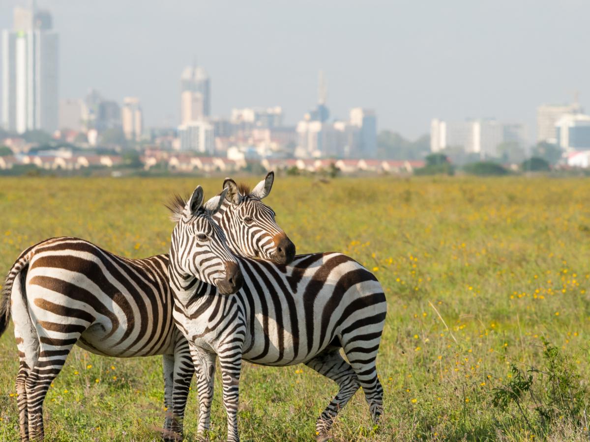 Best tourist attractions in Kenya