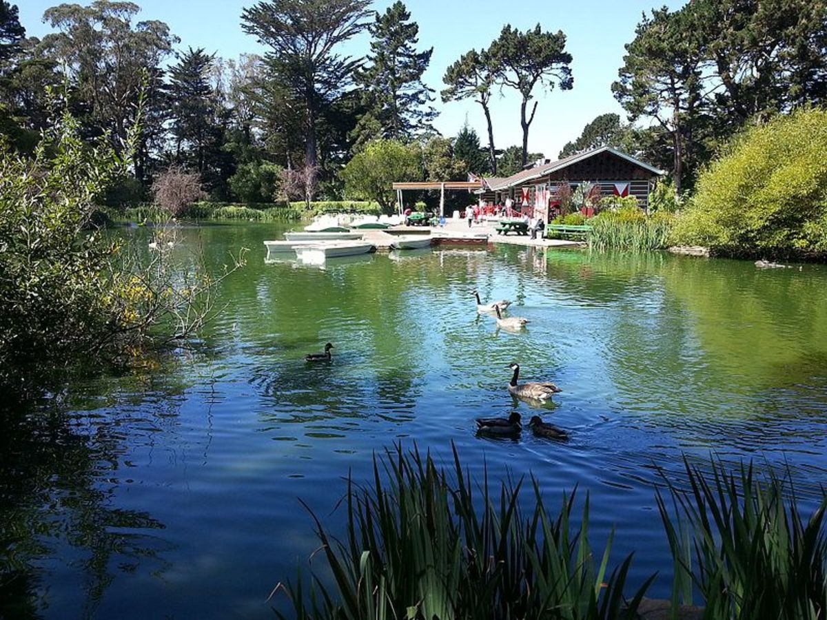 the-top-5-things-to-do-in-golden-gate-park