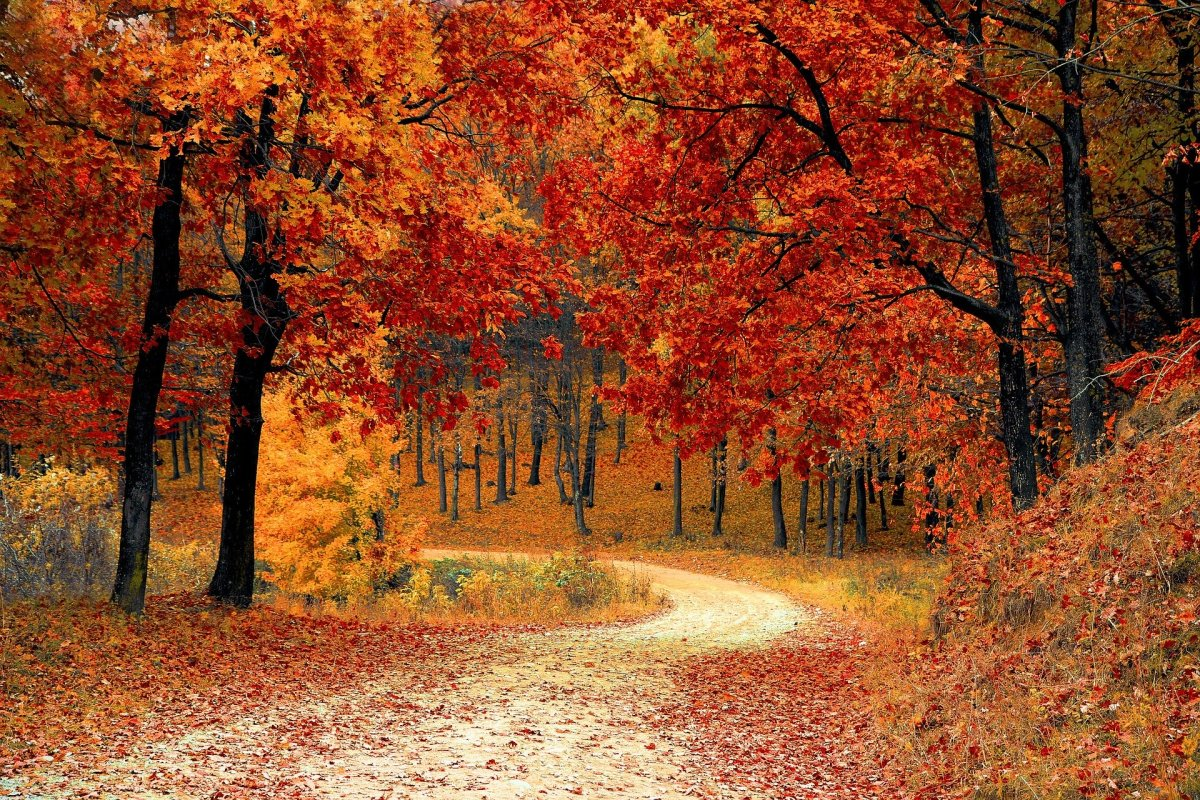 Colors along the trail (Valiphotos - Pixabay)