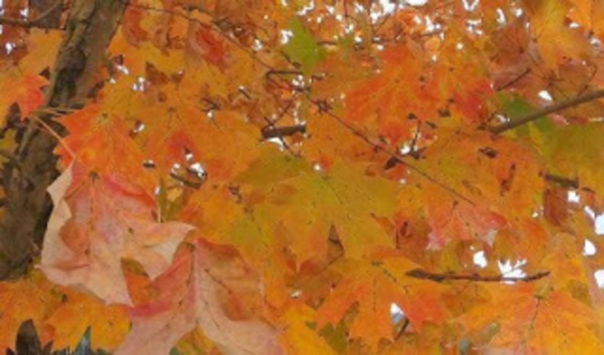 Autumn colors spread across northern Alabama (Wayne Ruple)