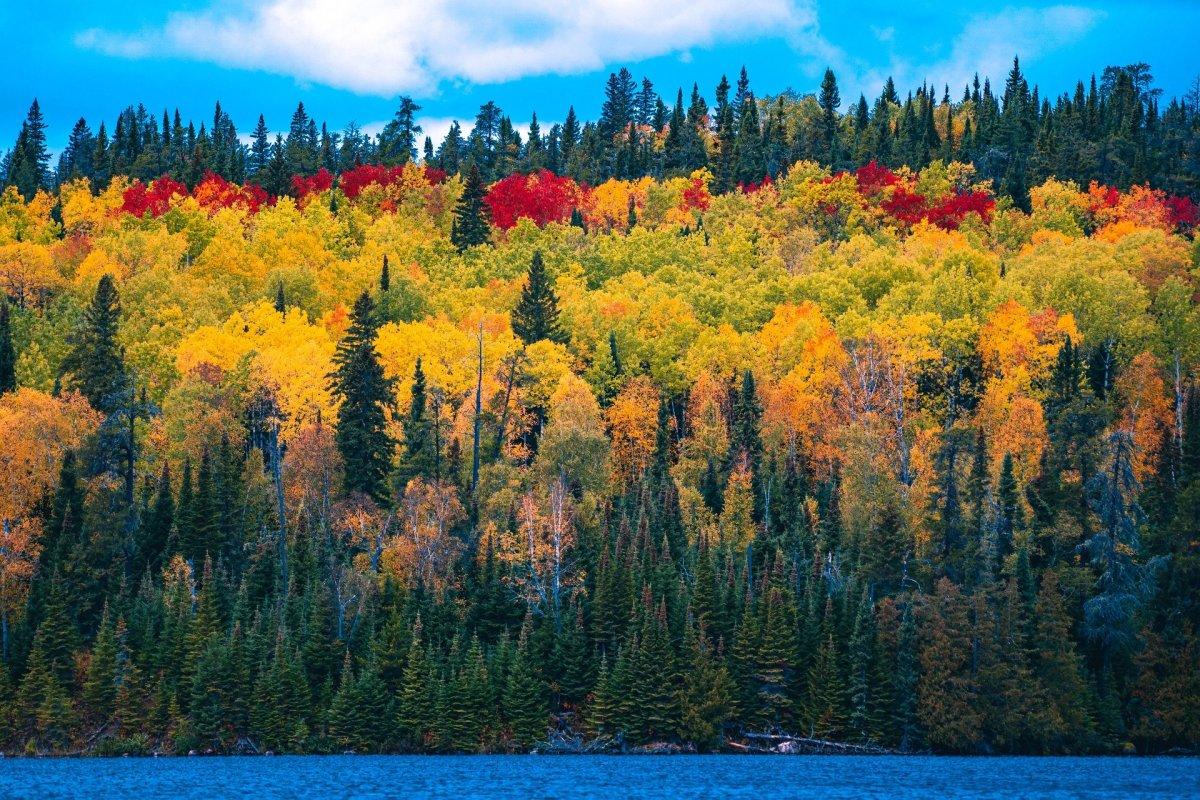 Forest Woods Lake (Jeff Klugiewicz - Pixabay)