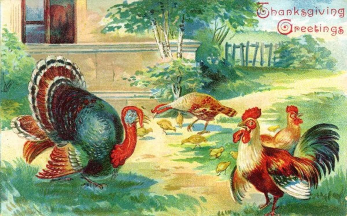 Barnyard Turkeys