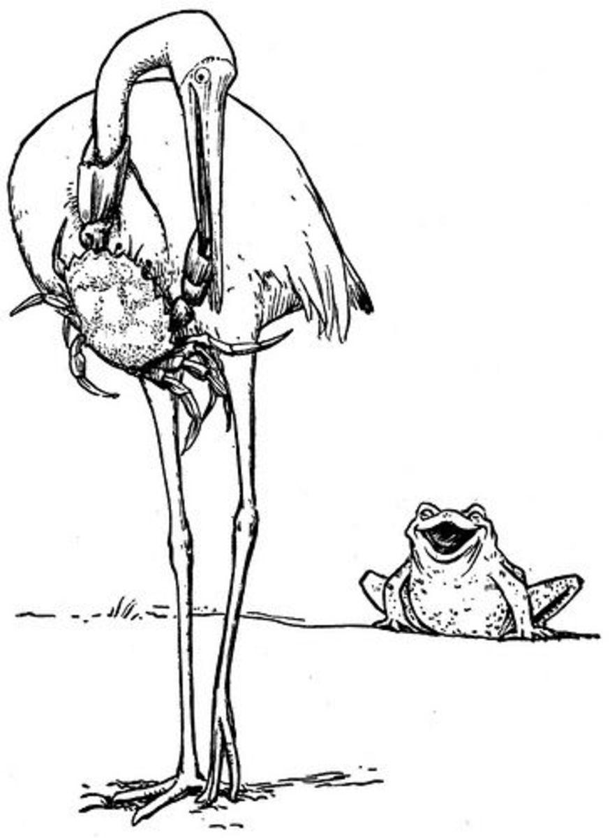 Frog Wins Again!