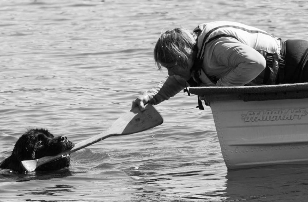 teaching-your-dog-a-good-retrieve
