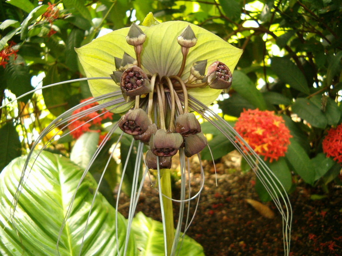 This one, is one of the most strange looking tropical flowers I have ever seen.